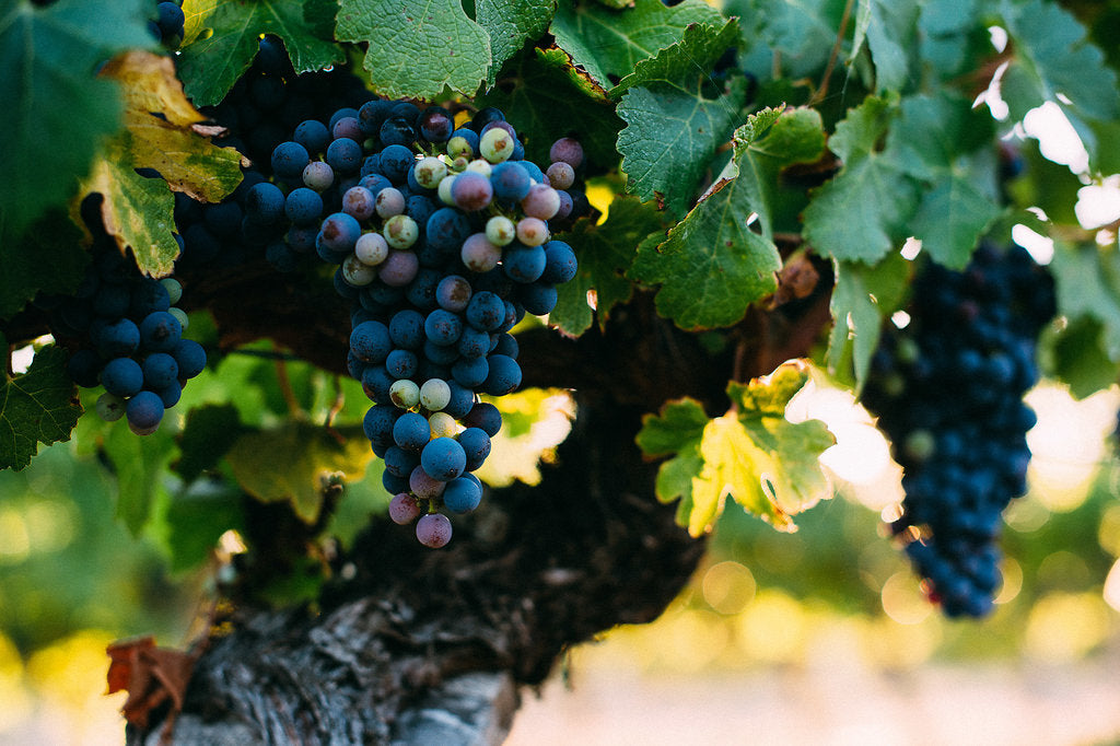 Wine & Vine Update - May 2019 | Aravina Estate