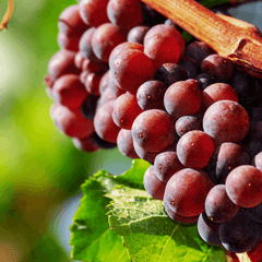 Non Alcoholic Wine Lowers Blood Pressure Grapes Skins Polyphenols