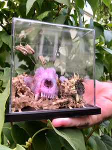 Amethyst inspired Crystalized Raccoon Skull
