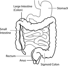 Outline of Gastro-Intestinal Tract