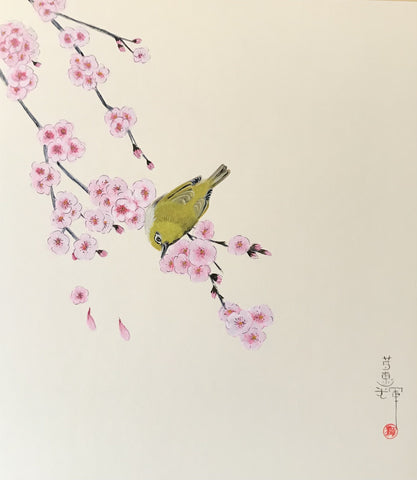 Japanese white-eye with blossom (*24 x 27 cm)