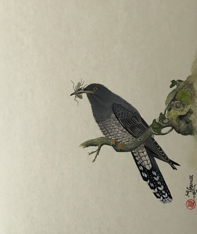 Cuckoo with insect