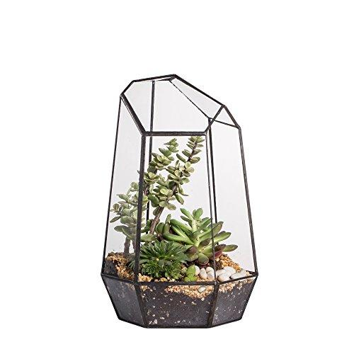 25cm Height Irregular Prism Glass Geometric Terrarium Tabletop Box Flower Pot Planter Large Tall for Succulent Plant Fern Moss