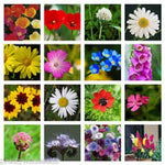 500g PURE WILD FLOWER MEADOW ALL SOILS PREMIUM SEEDS mix 22 500g By Pretty Wild Seeds