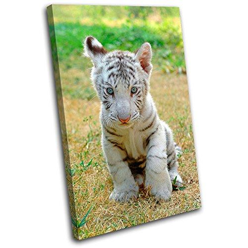 Bold Bloc Design - Baby White Tiger Animals - 135x90cm Canvas Art Print Box Framed Picture Wall Hanging - Hand Made In The UK - Framed And Ready To Hang