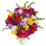 Fresh Freesia Fusion Flowers with Free Delivery and Name-a-Rose Gift - A Generous and Scented Hand Tied Bouquet of 30 Rainbow Mixed freesias All Wrapped by a Real Florist