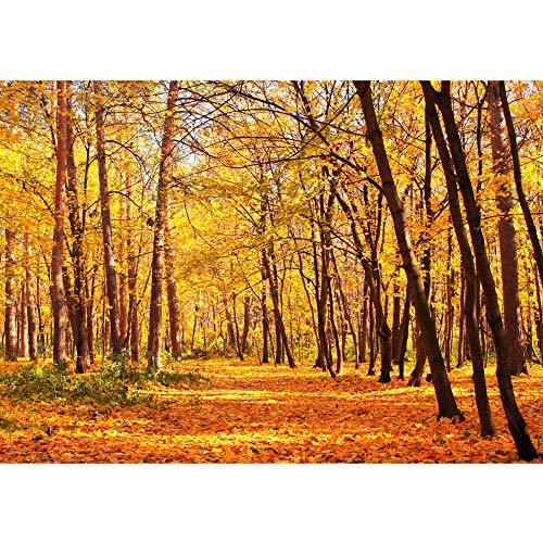 Non-woven Photographic Wallpaper 200 x 140 cm PREMIUM PLUS WALL MURAL PHOTO WALLPAPER – Autumn Forest – Nature Autumn Leaves Forest Trees Tree Forest Autumn – No. 084