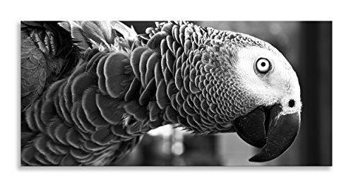 "Parrot Bird Art Black White Animal Kingdom Canvas Wall Art Panoramic Print for Living Room Bathroom Bedroom Kitchen Home Decor Picture Single Panel Framed (40"" x 18"" (102 cm x 46 cm))"