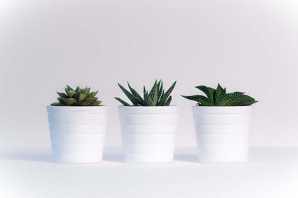 Make Your Home Happier & Healthier with Indoor Plants