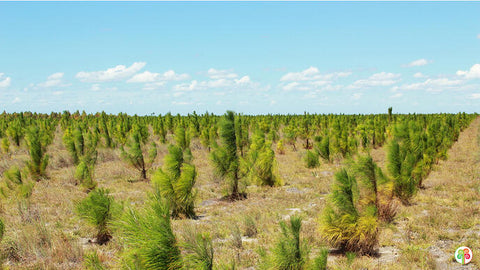 White & Green Reforestation Project