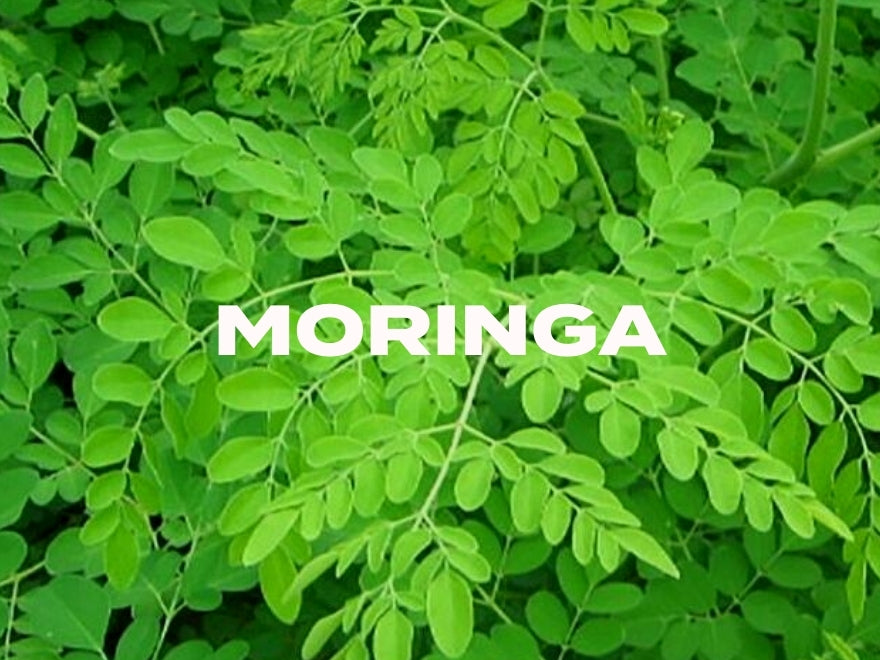 Why Our Moringa Is So Special