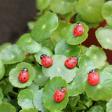 XBJ006 artificial 10 PCS Lady beetle Ornament garden miniatures gnomes moss terrariums crafts figurines for home garden decor