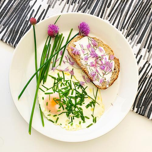 Fried egg with Chive blossoms