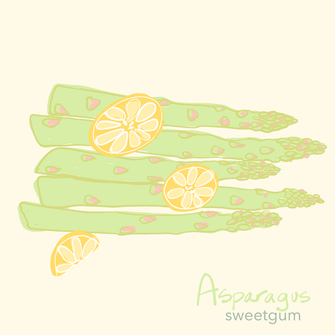 asparagus drawing by Sandra Venus
