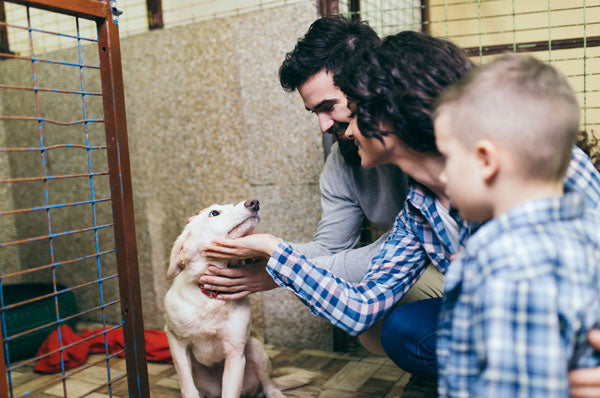 Amazing New Initiative Helps Dogs Get Adopted
