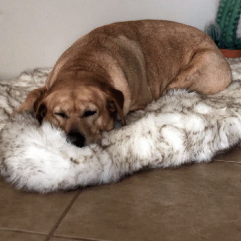 THE CALMING PUP™ - Faux Fur Orthopedic Memory Foam Dog Bed w/Removable cover