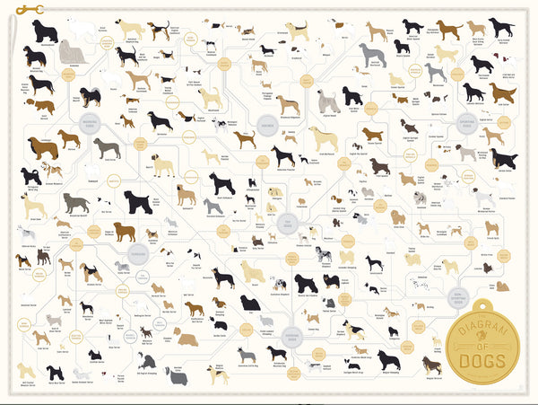 Dogs Diagrammed Poster