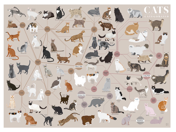 Cats Categorized Poster