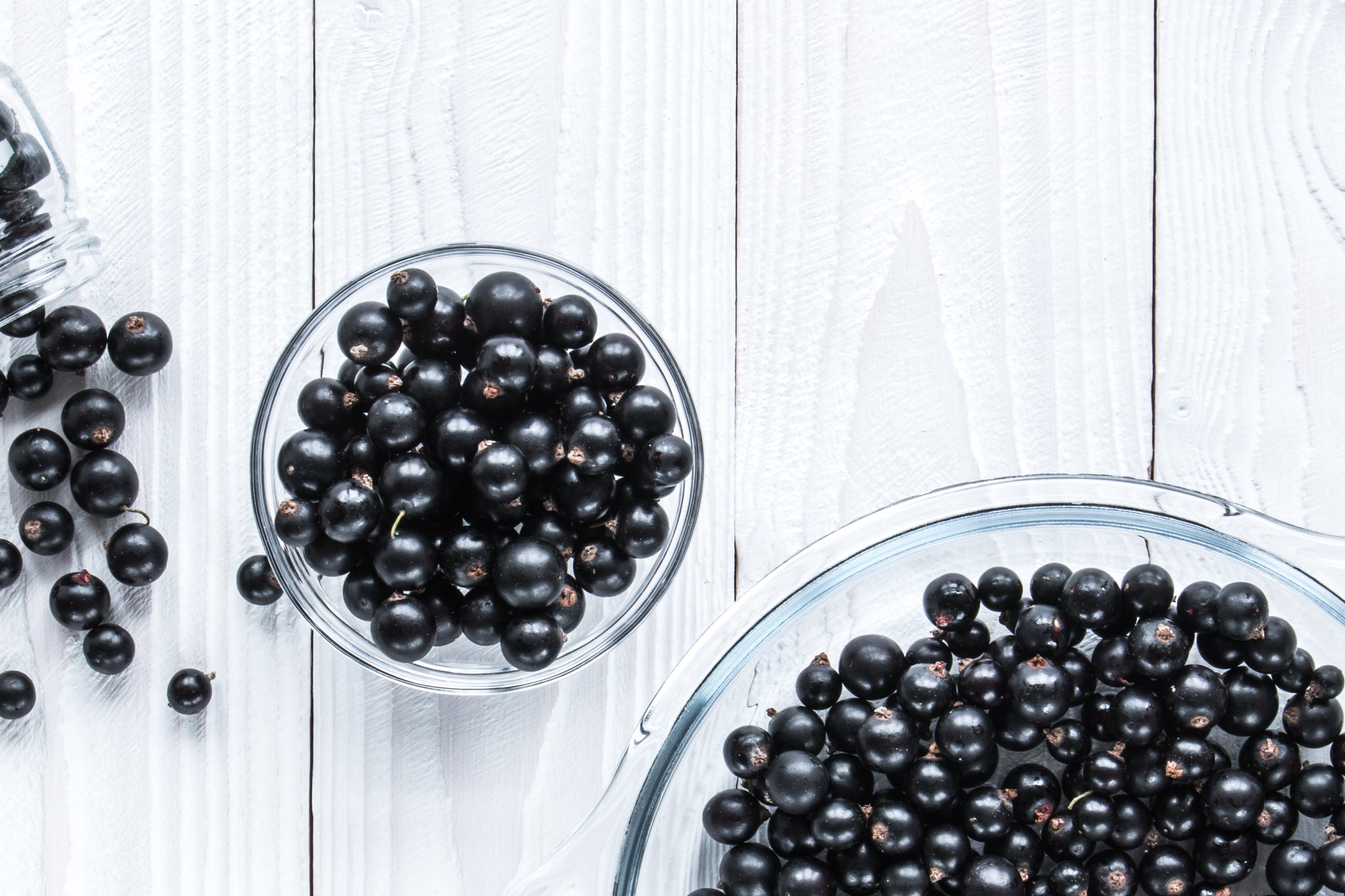 Blackcurrants and Brain Health – World First Discovery at Auckland University