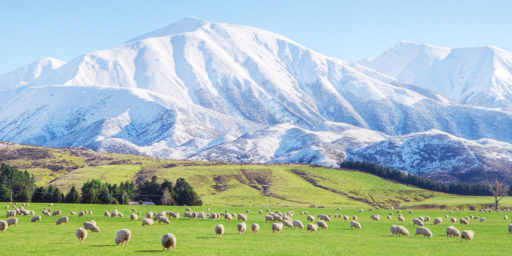 Wool - Mountains and sheep