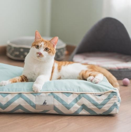 Pet Bed Millie Pets - Giving Gecko Giving Back To Animal Rescue Charities