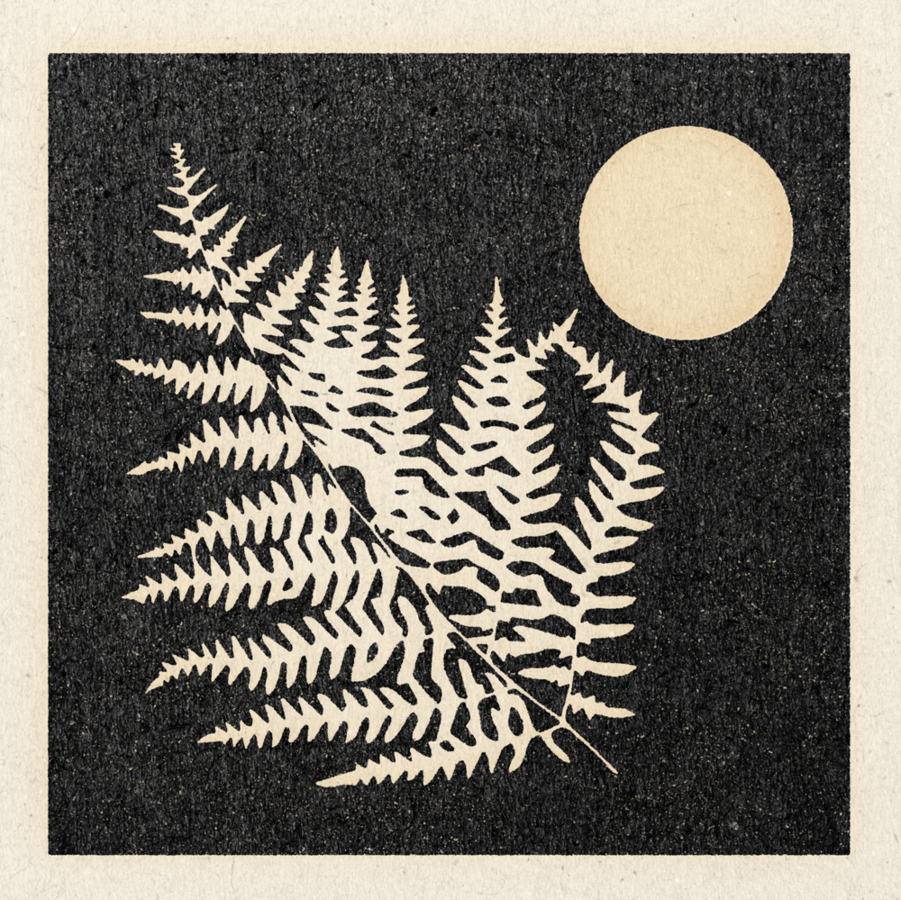 'Night Fern' Print