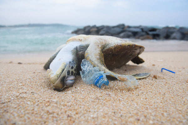 Plastic, oh how I loathe you. Its impact & why we avoid it