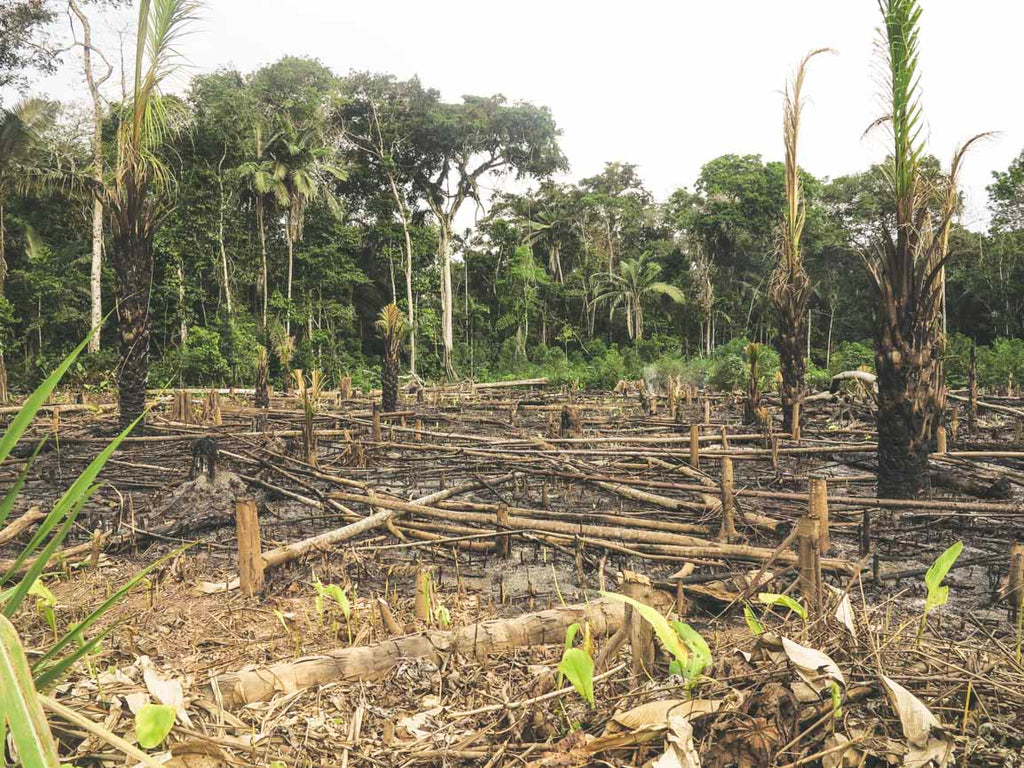 The Eco Society Sustainable Living Deforestation