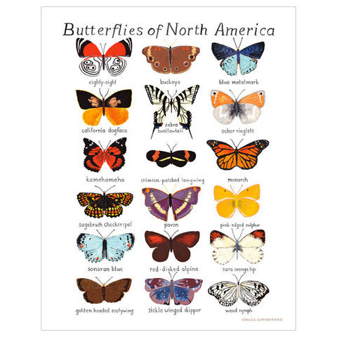 Butterflies of North America Print by Small Adventure