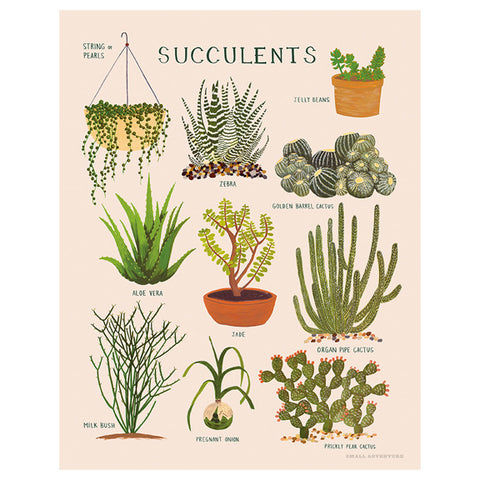 Succulents Print by Small Adventure