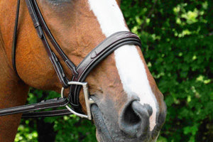 Red Barn Tryon Bridle noseband detail