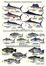 Fishermans Fish Identification Cards (Slates) - NSW Fisherman's Tackle Box Companion Guide / FG017