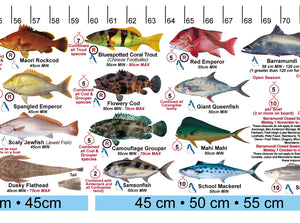 Fish Illustrations & Length Measure Decal/Sticker - Qld and Great Barrier Reef AFG050S