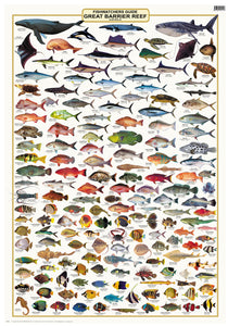 Fish Identification - Great Barrier Reef, Fishwatchers Species - Camtas Wall Chart / WCAF120