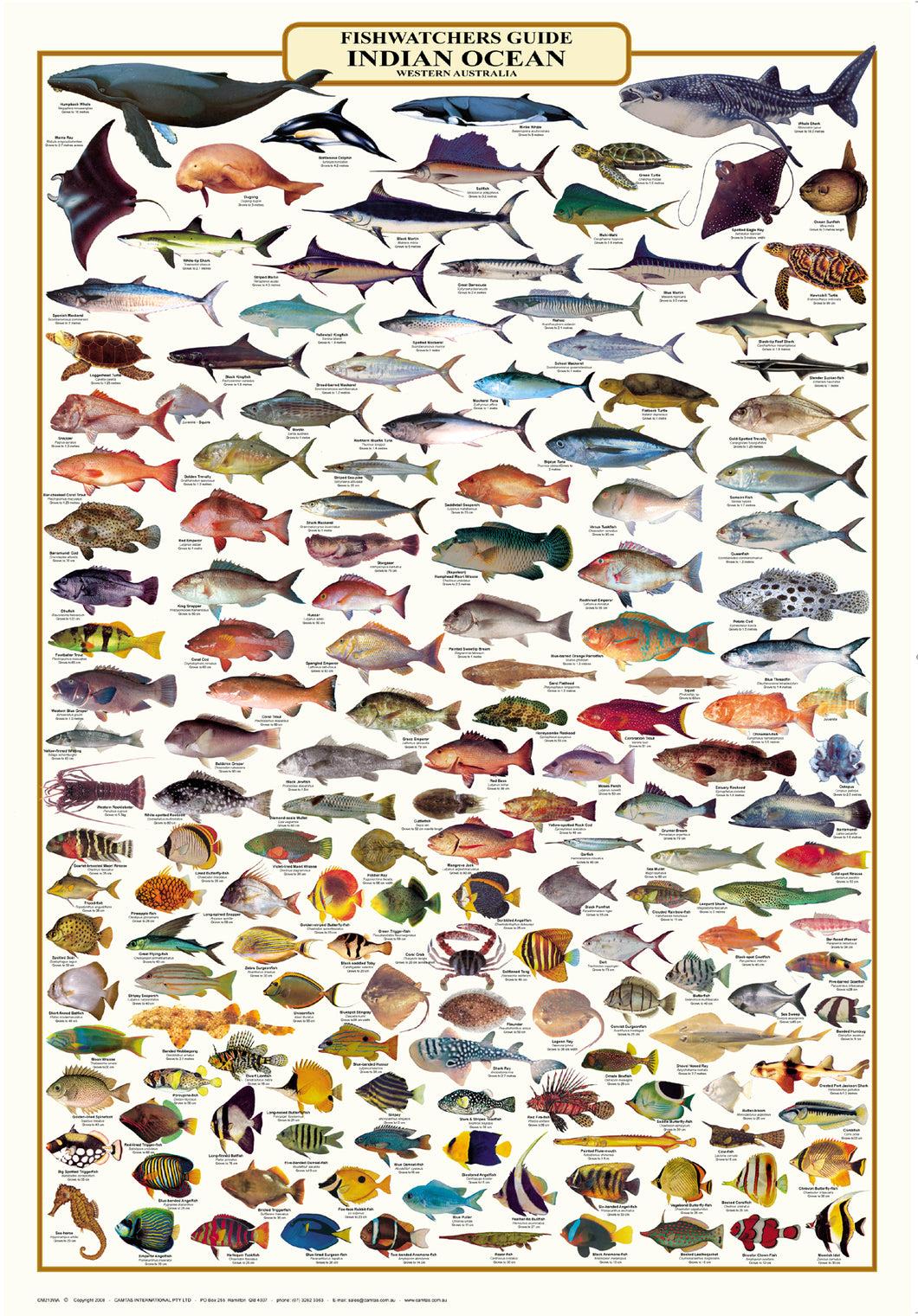 Fish Identification - Western Australia Fishwatchers Guide - Camtas Wall Chart / WCAF134