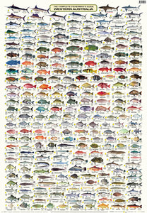 Fish Identification - Fisherman's Guide Western Australia - Camtas Wall Chart / WCAF180
