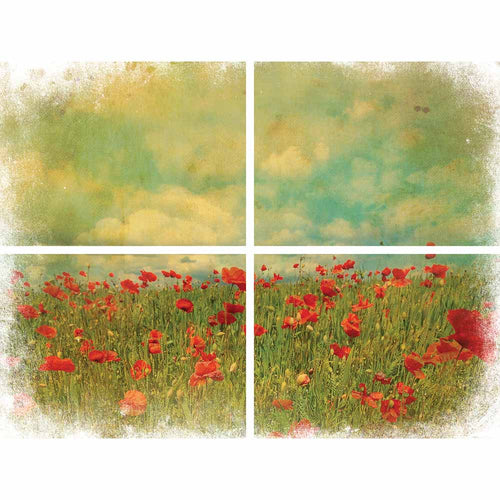 FIELD OF FLOWERS TRANSFER - BELLES AND WHISTLES
