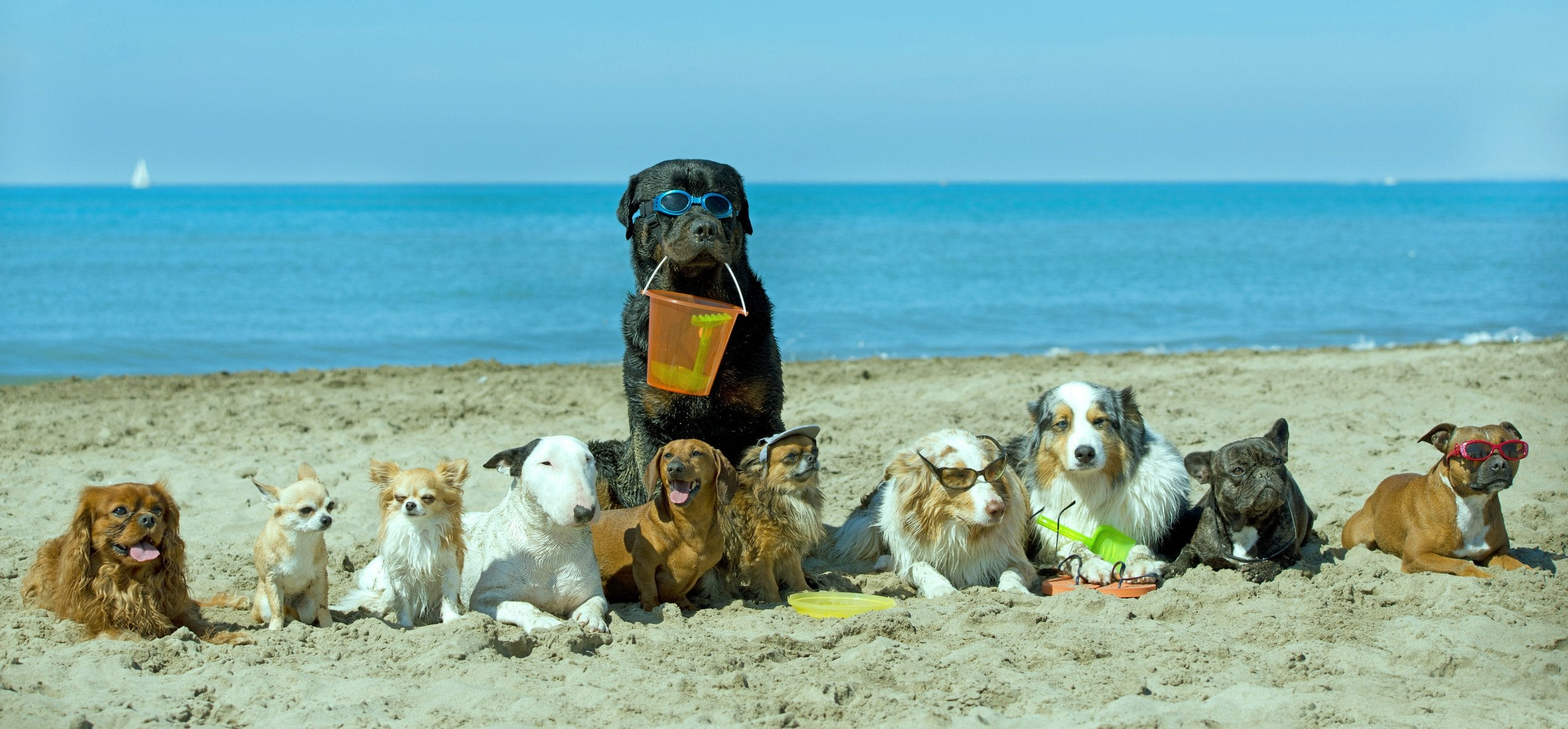 10 reasons to take your dog to the dog beach this summer