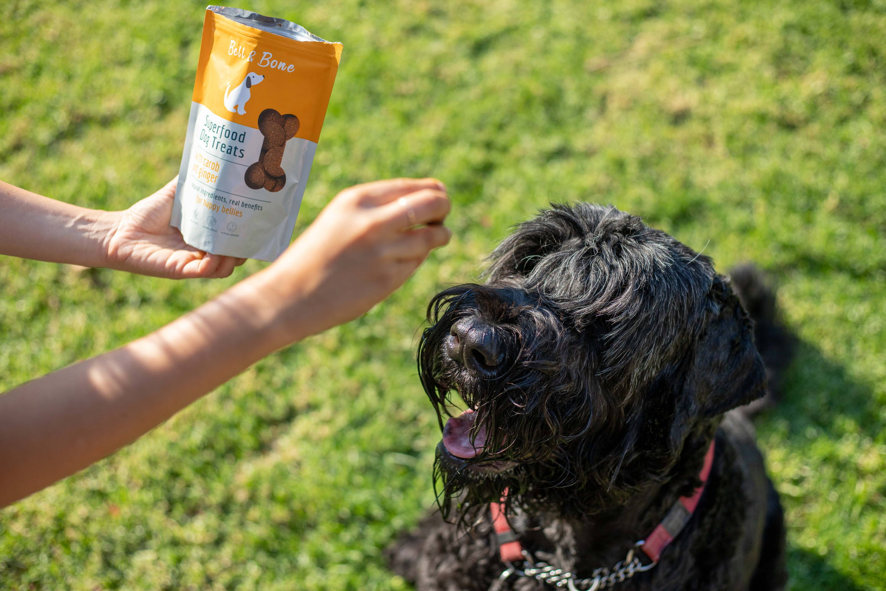 WHY WE LOVE HUMAN GRADE DOG FOOD