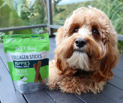 Bell & Bone Collagen Sticks for Puppies and Adult Dogs: Chicken and Blueberries