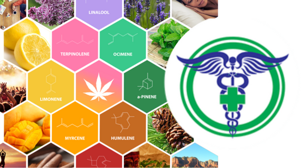 Terpene profiles their effects and benefits