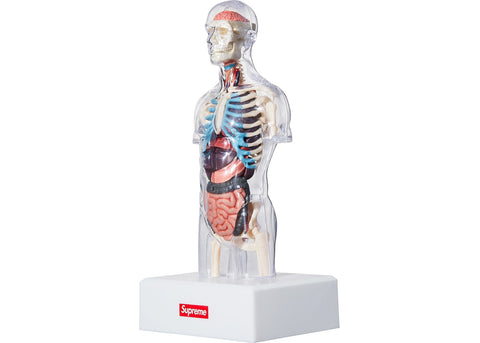Supreme Male Anatomy Model Clear