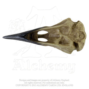 Alchemy - The Vault Corvus Alchemica Skull from Gothic Spirit