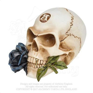 Alchemy - The Vault Black Rose Alchemist Skull from Gothic Spirit