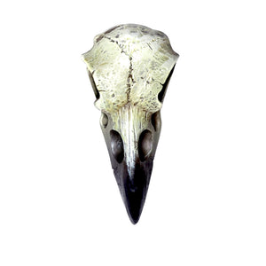 Alchemy - The Vault Reliquary Raven Skull Skull from Gothic Spirit