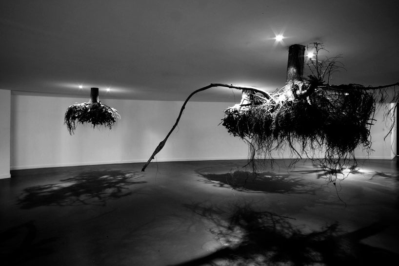 humus-tree-roots-from-above-giuseppe-licari-fallow-3