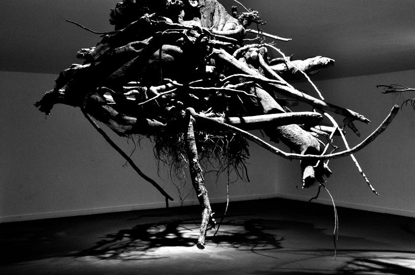humus-tree-roots-from-above-giuseppe-licari-fallow-4