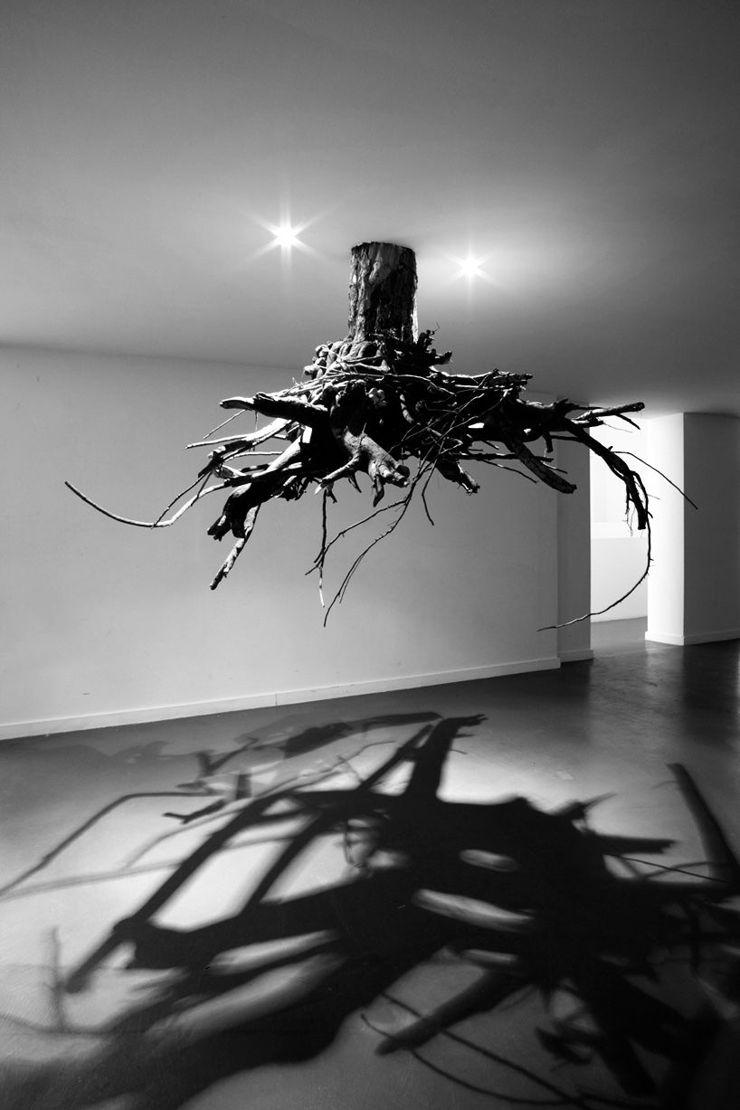humus-tree-roots-from-above-giuseppe-licari-fallow-6