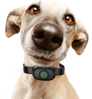 dog bark collar