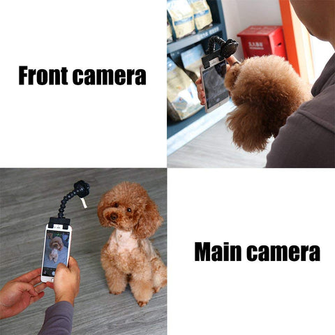 dog selfie stick treat